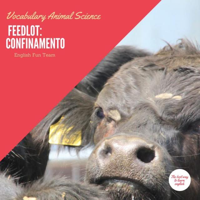 Feedlot - Confinamento