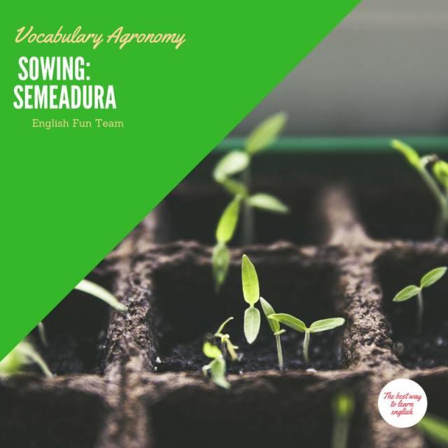 Sowing - Semeadura