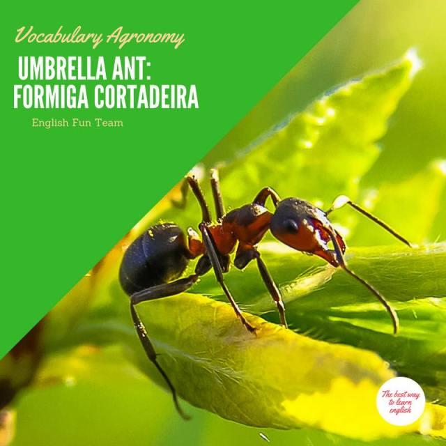 Umbrella Ant - Formiga cortadeira